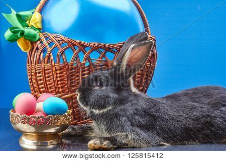 Beautiful bunny near a basket with a balloon and a vase with Easter eggs