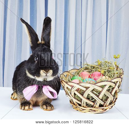 Black rabbit with a bow sitting near a basket with Easter eggs