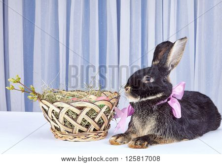 Near a beautiful basket with Easter eggs is a rabbit with a bow at the neck