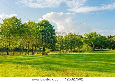 Green Lawn In City Park Under Sun Beam Light