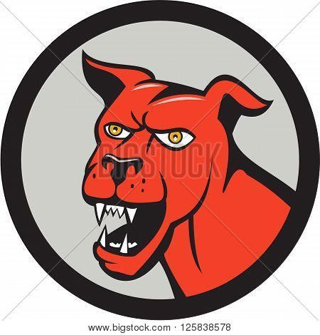 Illustration of a red mastiff dog mongrel head barking set inside circle on isolated background done in cartoon style.