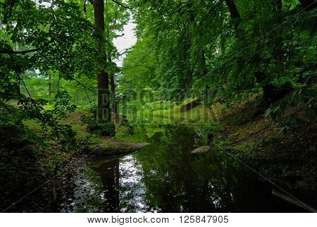 The River Flows In A Green Forest