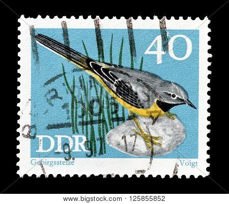 GERMAN DEMOCRATIC REPUBLIC - CIRCA 1978 : Cancelled postage stamp printed by German Democratic Republic, that shows Grey wagtail.
