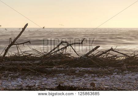 sea winter view in Massa zone in Italy