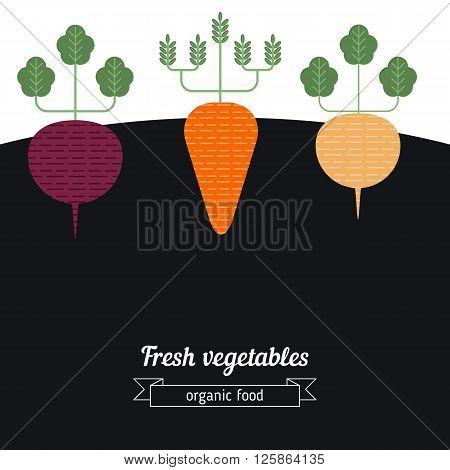Beets Carrots Turnips vegetables illustration. Vegetables garden background.
