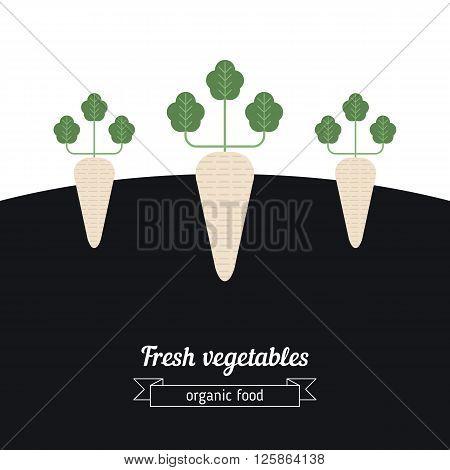 Daikon vegetables illustration. Vegetables garden background with daikon.