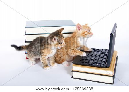 male orange tabby kitten looking at miniature laptop type computer. Female calico tortie sitting behind with mouth open. talking. Piles of books next to and under computer. paw on keyboard