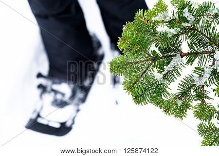 Snowshoeing in the winter, selective focus, tree