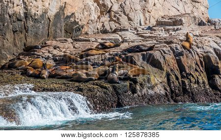 A small colony of California Sea lions sun themselves on rocks by Cabo San Lucas.
