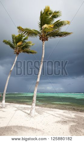 palms and Caribbean beach, La Desirade, Guadeloupe