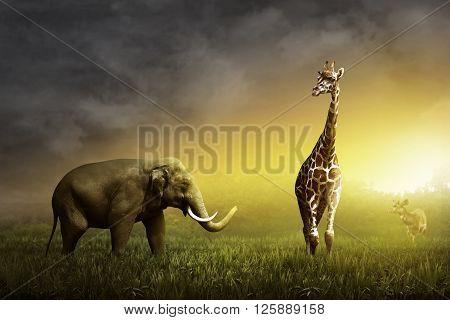 Elephant, Giraffe, And Deer On The Grassland