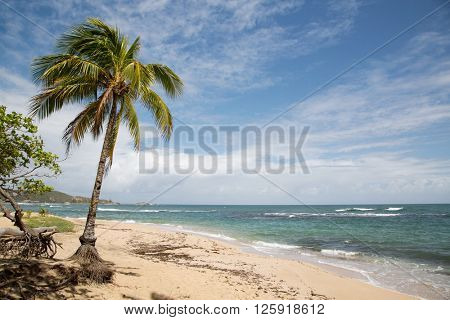 Amazing view of caribbean beach with sand and beautiful exotic palm trees, Dominican Republic, Caribbean Islands