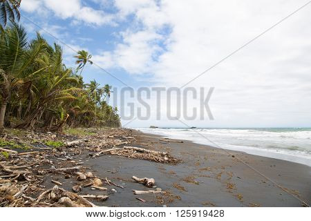 Wild black beach with palm trees on the caribbean island Dominican Republic.