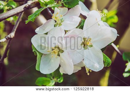 Blooming flower in garden