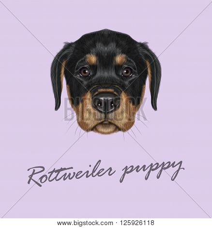 Cute face of domestic dog on violet background.
