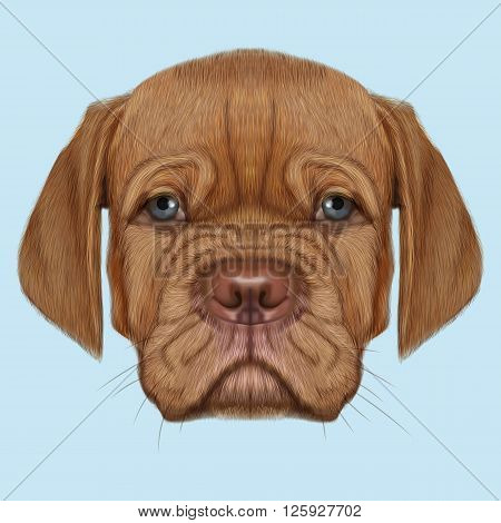 Cute face of red domestic dog with blue eyes on blue background.
