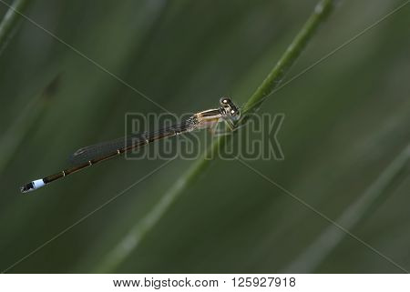 A macro shot of a damselfly on a branch
