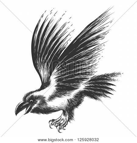 Black Raven drawn in sketch style. Isolated on white.