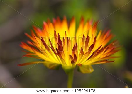 A macro shot of a beautiful flower