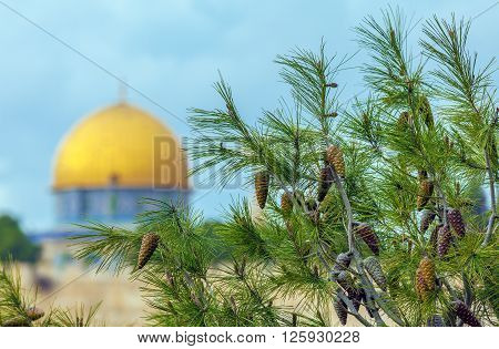 Pine Tree And Blurred Al-aqsa Mosque