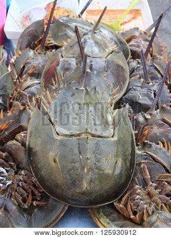 Closed up Horseshoe crab in Thai local market