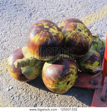 Asian Palmyra palm Toddy palm Sugar palm Cambodian palm in Thai Local Market
