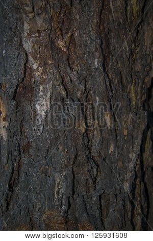 Textured background - pine bark. Photo of bark of old pines. ** Note: Soft Focus at 100%, best at smaller sizes