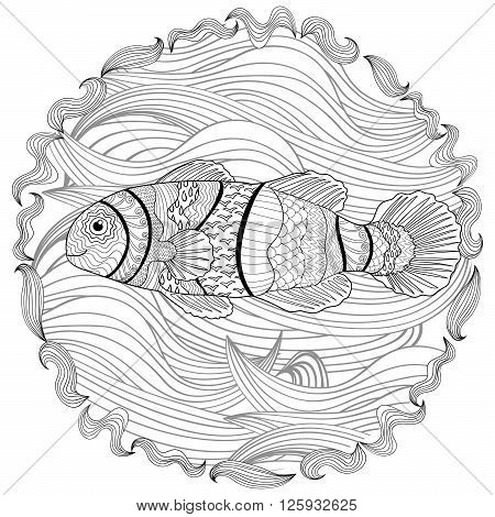 Clownfish with high details. Adult antistress coloring page. Black white hand drawn doodle oceanic animal. Sketch for tattoo, poster, print, t-shirt in zentangle style. Vector illustration.
