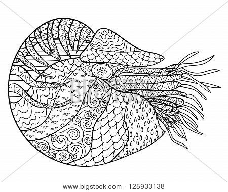 Nautilus with high details. Adult antistress coloring page. Black white hand drawn zendoodle oceanic animal. Sketch for tattoo, poster, print, t-shirt in zentangle style. Vector illustration.