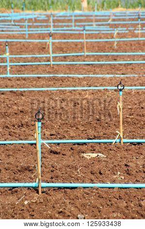 Farming sprinkler on plant plot in Thailand
