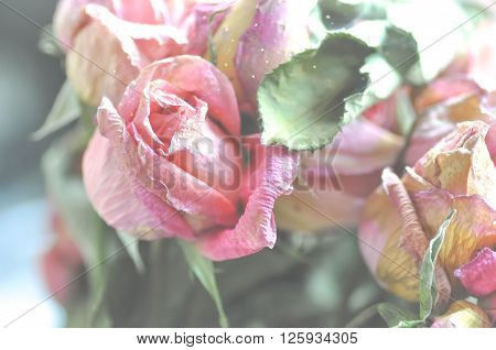 boquet of dried rose flowers in blur background