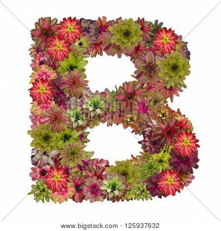 letter B made from bromeliad flowers isolated on white background