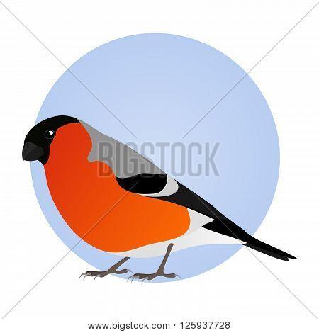 Bullfinch isolated on blue circle frame. Icon, logo. Vector illustration.