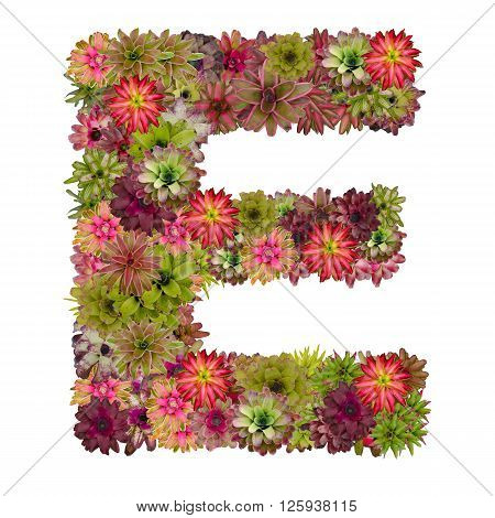 letter E made from bromeliad flowers isolated on white background