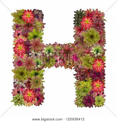 letter H made from bromeliad flowers isolated on white background