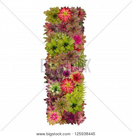 letter I made from bromeliad flowers isolated on white background