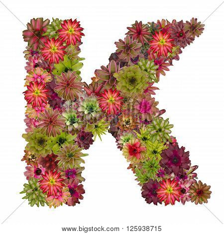 letter K made from bromeliad flowers isolated on white background