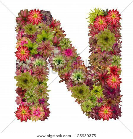 letter N made from bromeliad flowers isolated on white background