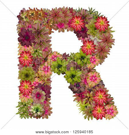 letter R made from bromeliad flowers isolated on white background