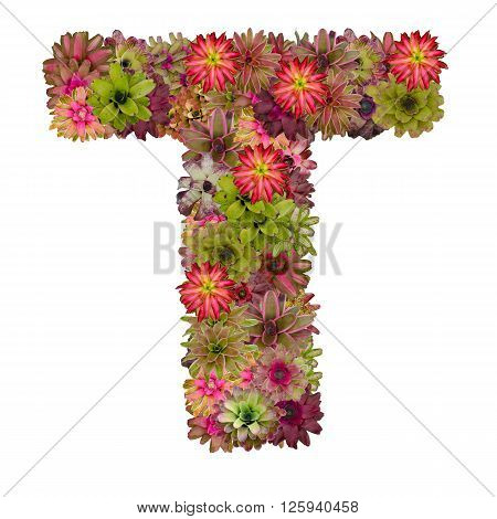 letter T made from bromeliad flowers isolated on white background