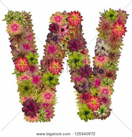 letter W made from bromeliad flowers isolated on white background