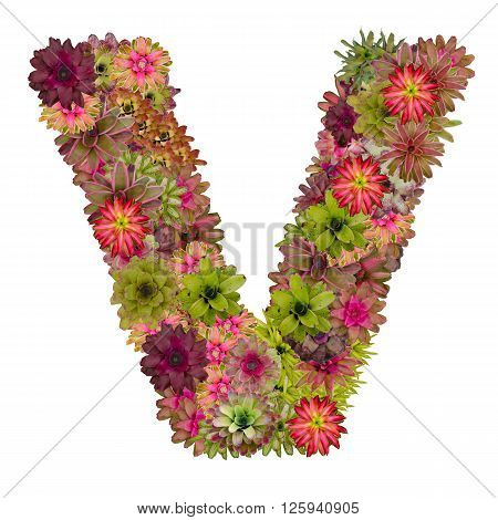 letter V made from bromeliad flowers isolated on white background