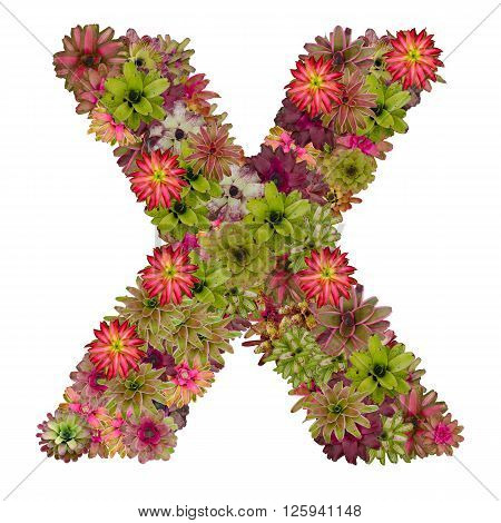 letter X made from bromeliad flowers isolated on white background