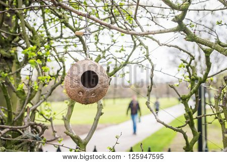Coconut bird feeder in a park, with people in background