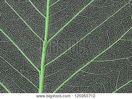 macro of a delicate leaf cell structure