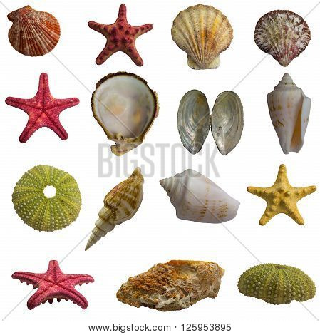 Seashell collage big pack isolated on white background
