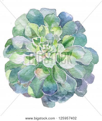 Watercolor succulent plant handpainted with watercolor paint