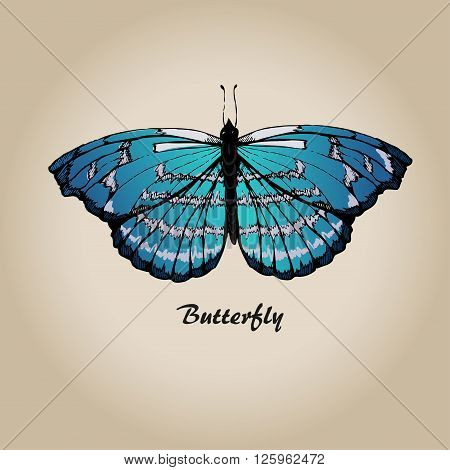 Butterfly vector. Insect sketch collection for design