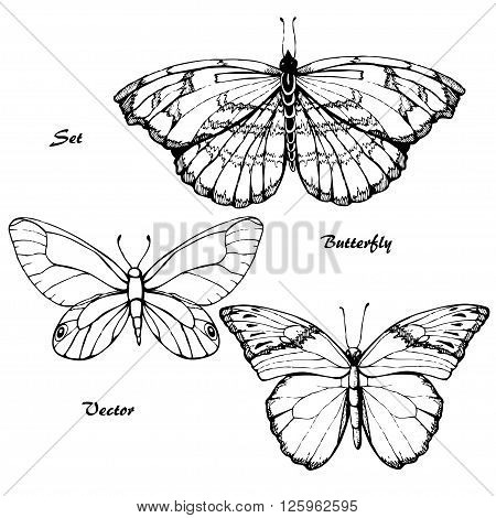 Butterfly set. Insect sketch collection for design