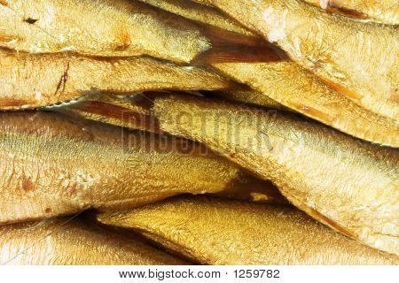 Fish Bakground
